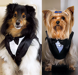 Ceremony Accessory Pet Tux
